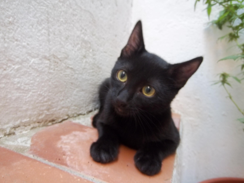 Qu es cosas de gatos alimentacion cuidado juegos de - El gato en casa ...
