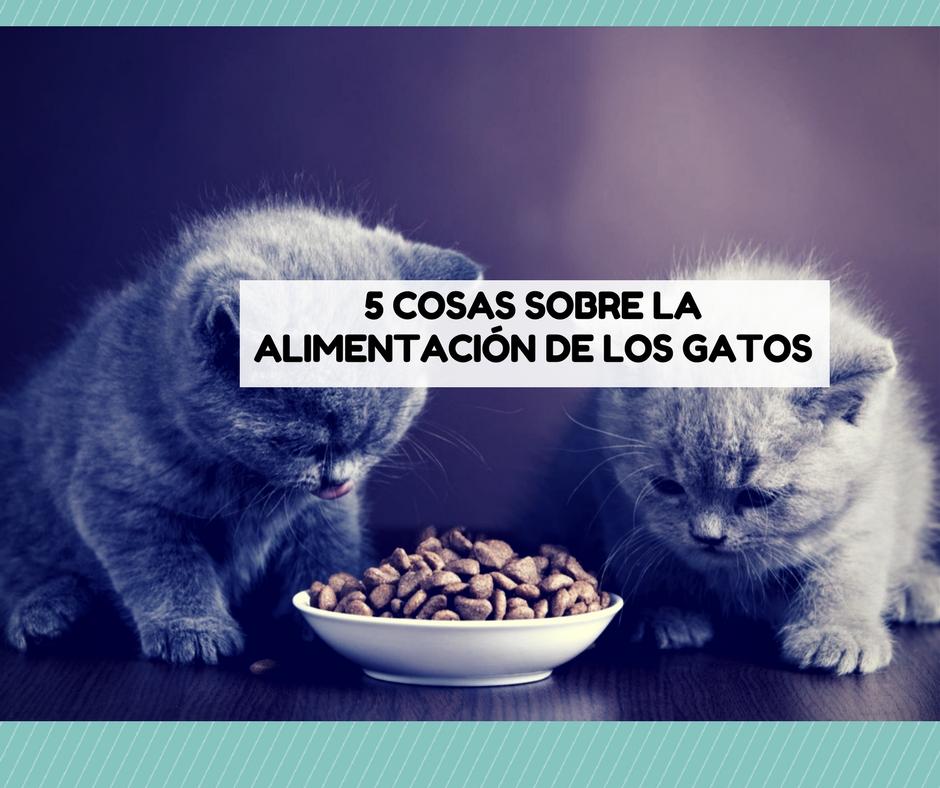 5 Cosas Que Debes Saber Sobre La Comida Del Gato Cosas De Gatos