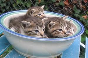 Estos gatitos se han enterado de que su plato de agua es lo más seguro y se han metido ellos | Foto:  http://chance87.deviantart.com