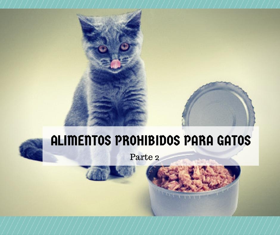 Qu alimentos no debe comer mi gato 2 de 2 cosas de - Alimento para gatos esterilizados ...