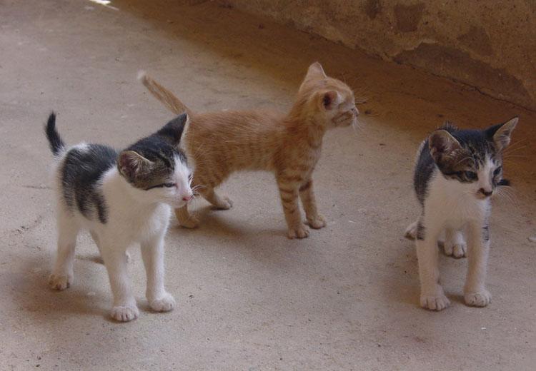 El Color De Los Gatos Pura Genética Felina Cosas De Gatos