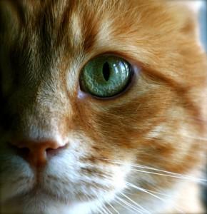 Los gatos utilizan los ojos como elemento de comunicación corporal | Foto: evilnesscroft.deviantart.com