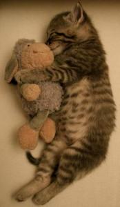 El gato bebé libera la hormona del crecimiento durante el sueño | Foto: ashleythelovebird.deviantart.com