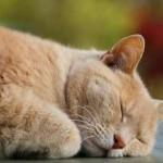 El gato adulto duerme una media de 20 horas diarias | Foto: sloorth.deviantart.com