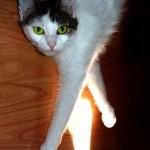 El gato busca el sol para dormir bajo él y regular su temperatura | Foto: the-shadowcat.deviantart.com