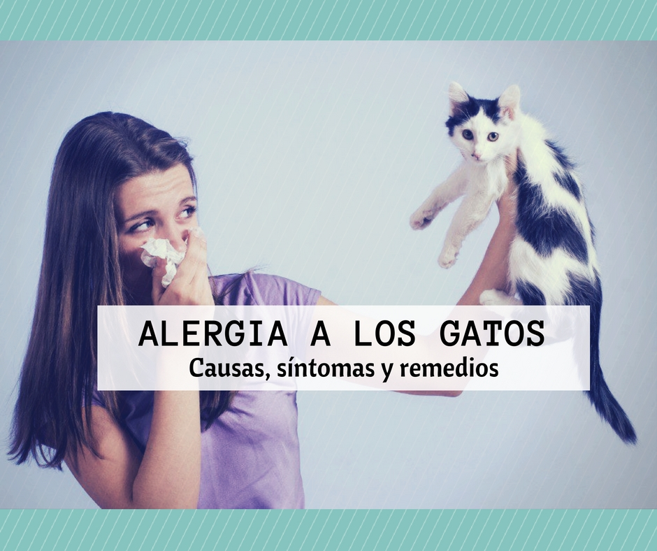Alergia A Los Gatos Causas Sintomas Y Remedios Cosas De Gatos