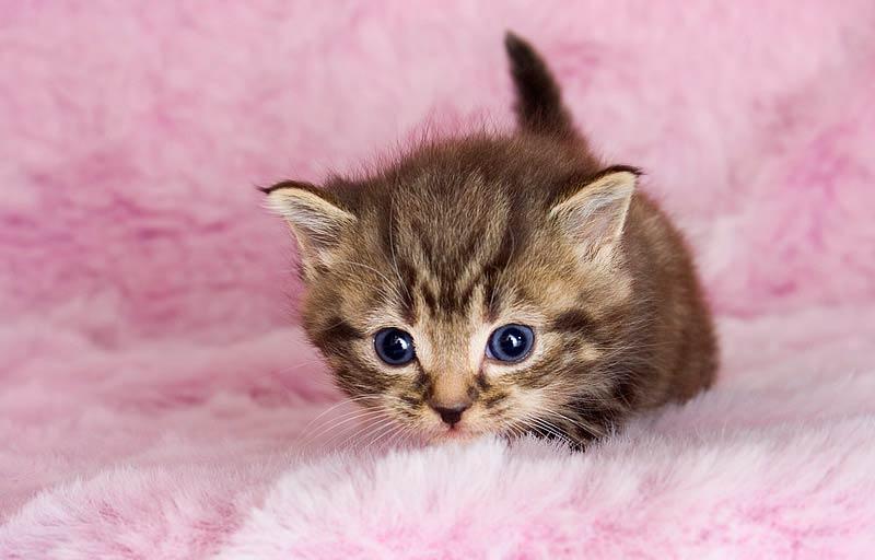 Cómo ayudar a los gatos de la calle: las casas de acogida temporal ...