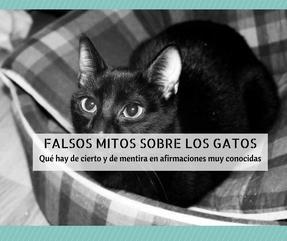 6df792c15 Falsos mitos sobre los gatos