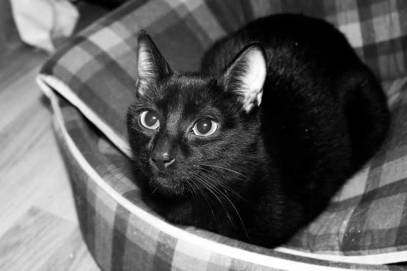 Falsos mitos sobre los gatos | Cosas de Gatos