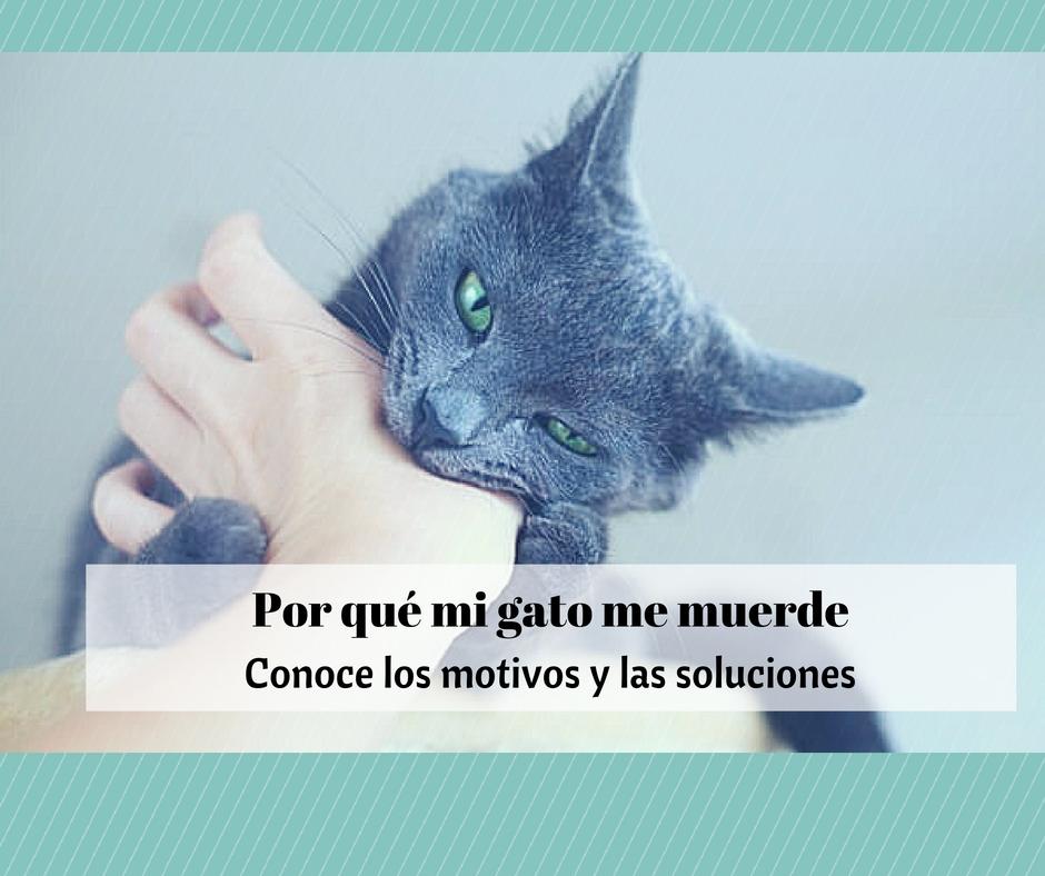 Mordiscos De Amor Archives Cosas De Gatos