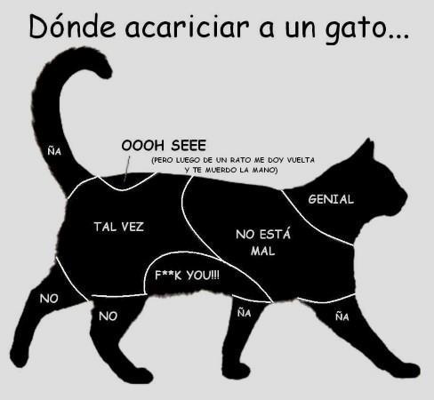 Por Qué Mi Gato Me Muerde Cosas De Gatos