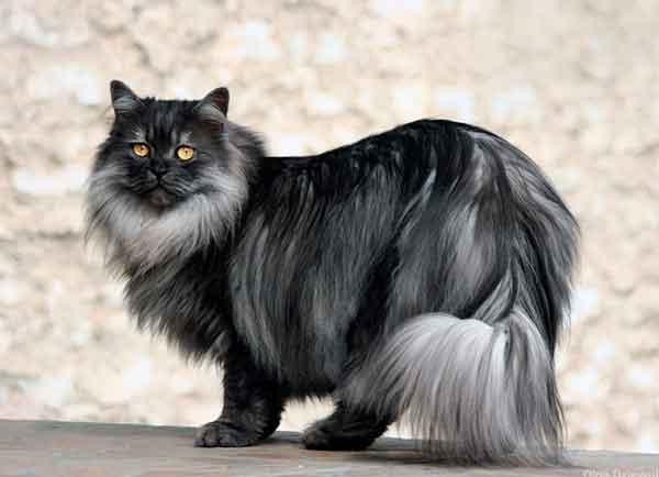 El pelo del gato consejos para su cuidado cosas de gatos for Como ahuyentar gatos del jardin