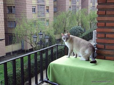 Proteger a tu gato de las ca das desde ventanas balcones for Red transparente para gatos