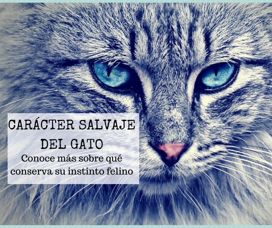 El gato y su carácter salvaje, ¿es un animal doméstico o domesticado ...